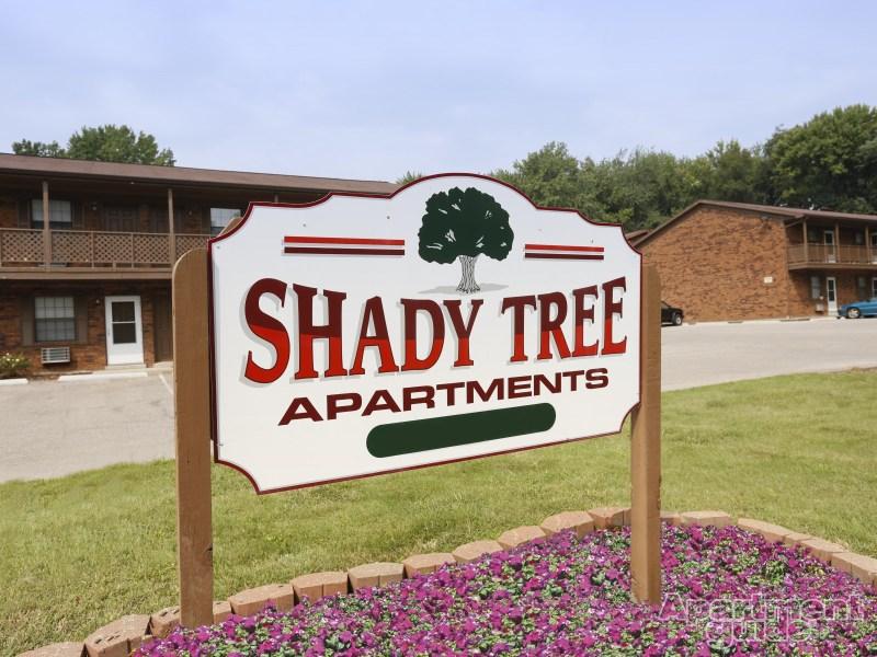 Shady Tree Pic